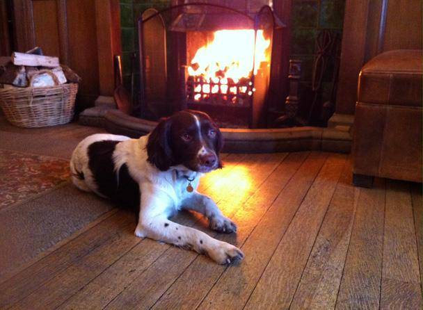 Lake District Country Hotels Dog friendly gallery image